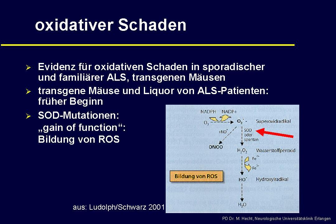 Ursache von ALS - oxidativer Schaden